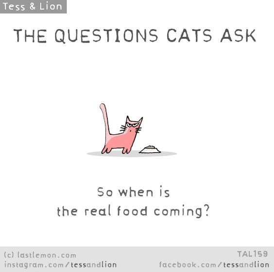 Text - Tess & Lion THE QUESTIONS CATS ASK So when is the real food coming? (c) lastlemon.com instagram.co m/ tessandlion TAL159 facebook.com/ tessandlion