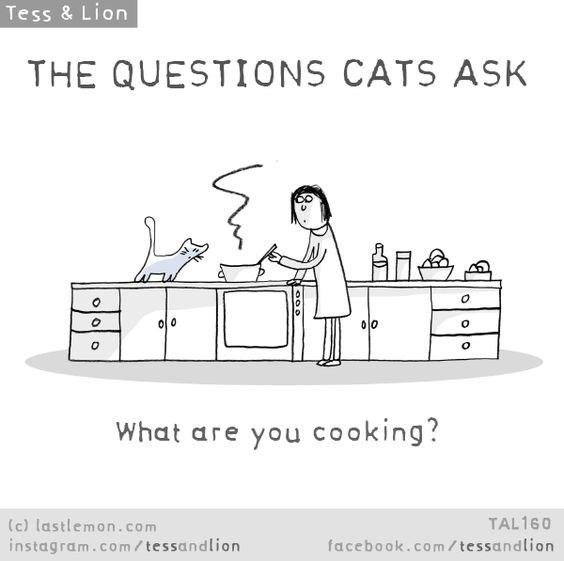 Text - Tess & Lion THE QUESTIONS CATS ASK 이0 00 What are you cooking? (c) lastlemon.com instagram.co m/ tessandlion TAL160 facebook.com/tessandlion