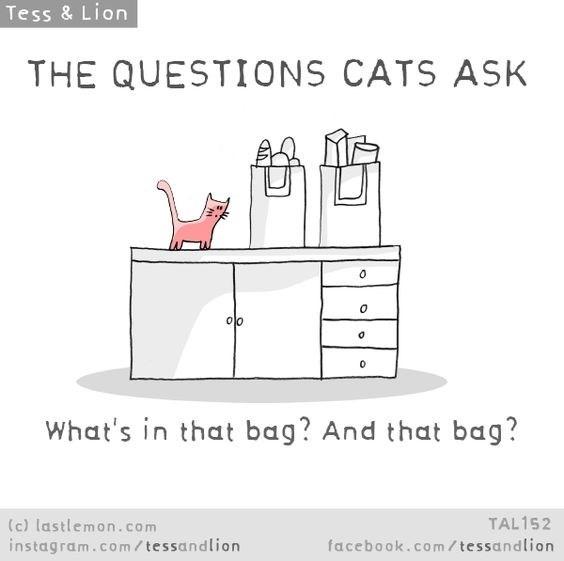 Text - Tess & Lion THE QUESTIONS CATS ASK What's in that bag? And that bag? TAL152 (c) lastlemon.com instagram.co m/ tessandlion facebook.com/tessandlion