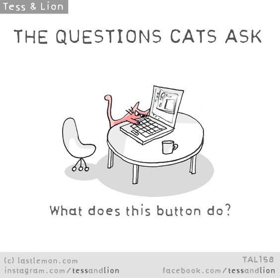 Text - Tess & Lion THE QUESTIONS CATS ASK What does this button do? (c) lastlemon.com instagram.co m/ tessandlion TAL158 facebook.com/tessandlion