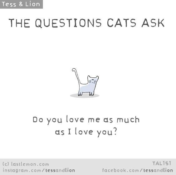 Text - Tess & Lion THE QUESTIONS CATS ASK Do you love me as much as I love you? TAL151 (c) lastlemon.com instagram.co m/ tessandlion facebook.com/tessandlion