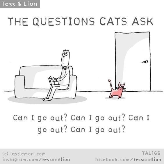 Text - Tess & Lion THE QUESTIONS CATS ASK Can I go out? Can I go out? Can I go out? Can I go out? (c) lastlemon.com instagram.co m / tessandlion TAL165 facebook.com /tessandlion