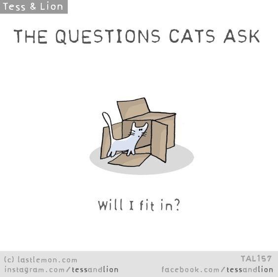 Text - Tess & Lion THE QUESTIONS CATS ASK will I fit in? TAL157 (c) lastlemon.com instagram.co m / tessandlion facebook.com/tessandlion