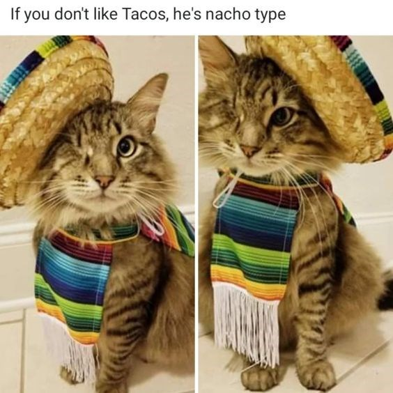 If you dont like Tacos, he's nacho type cute one eyed cat wearing a sombrero
