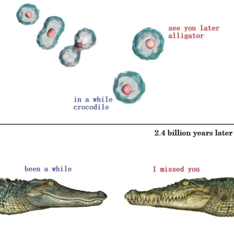 Crocodile - see you later alligator in a while crocodile 2.4 billion years later been a while I missed you