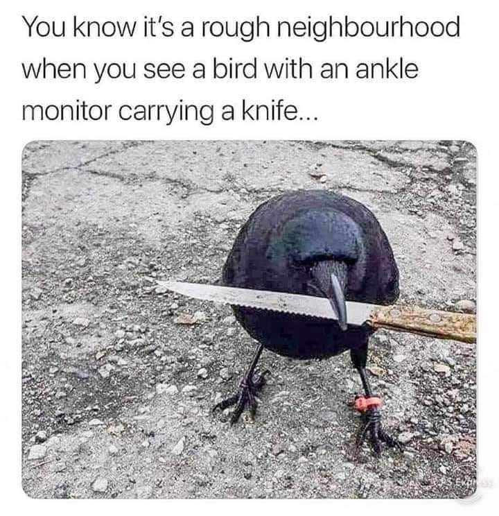 Organism - You know it's a rough neighbourhood when you see a bird with an ankle monitor carrying a knife...