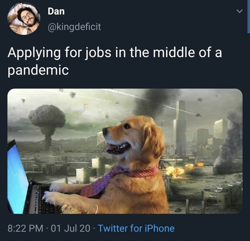 Canidae - Dan @kingdeficit Applying for jobs in the middle of a pandemic 8:22 PM · 01 Jul 20 · Twitter for iPhone
