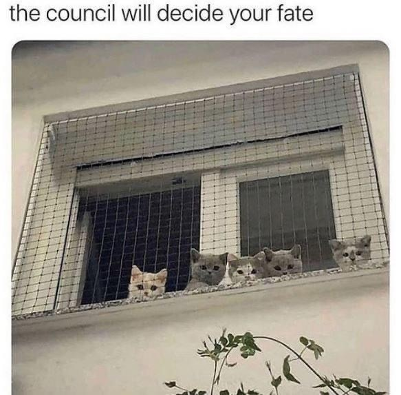 Cat - the council will decide your fate
