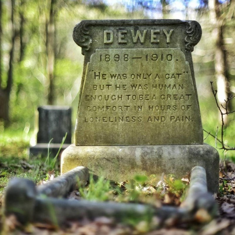 gravestone DEWEY he was only a cat but he was human enough to be a great comfort in the hours of loneliness and pain