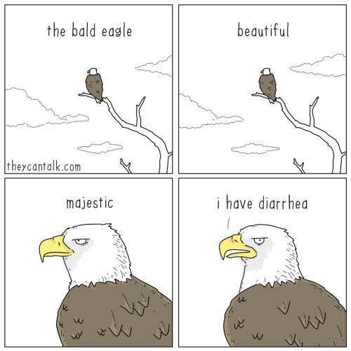 Bald eagle - the bald eagle beautiful theycantalk.com majestic i have diarrhea