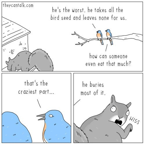 Text - he's the worst. he takes all the bird seed and leaves none for us. theycantalk.com how can someone even eat that much? that 's the he buries craziest part... most of it. HISS