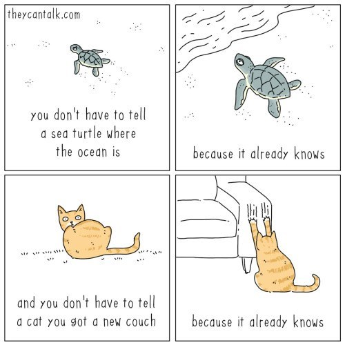 Text - theycantalk.com You don't have to tell a sea turtle where the ocean is because it already knows ... and you don't have to tell a cat you got a new couch because it already knows