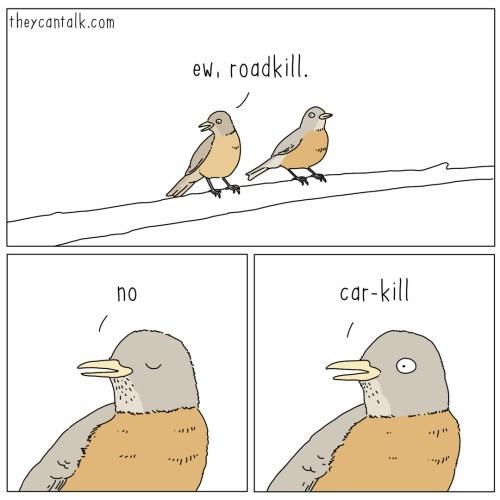 Bird - theycantalk.com ew, roadkill. no car-kill * .