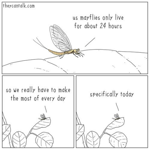 Text - theycantalk.com us mayflies only live for about 24 hours so we really have to make the most of every day Specifically today
