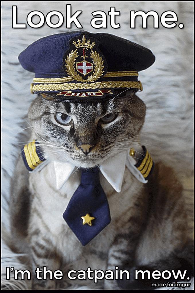 funny cat meme dressed as a captain