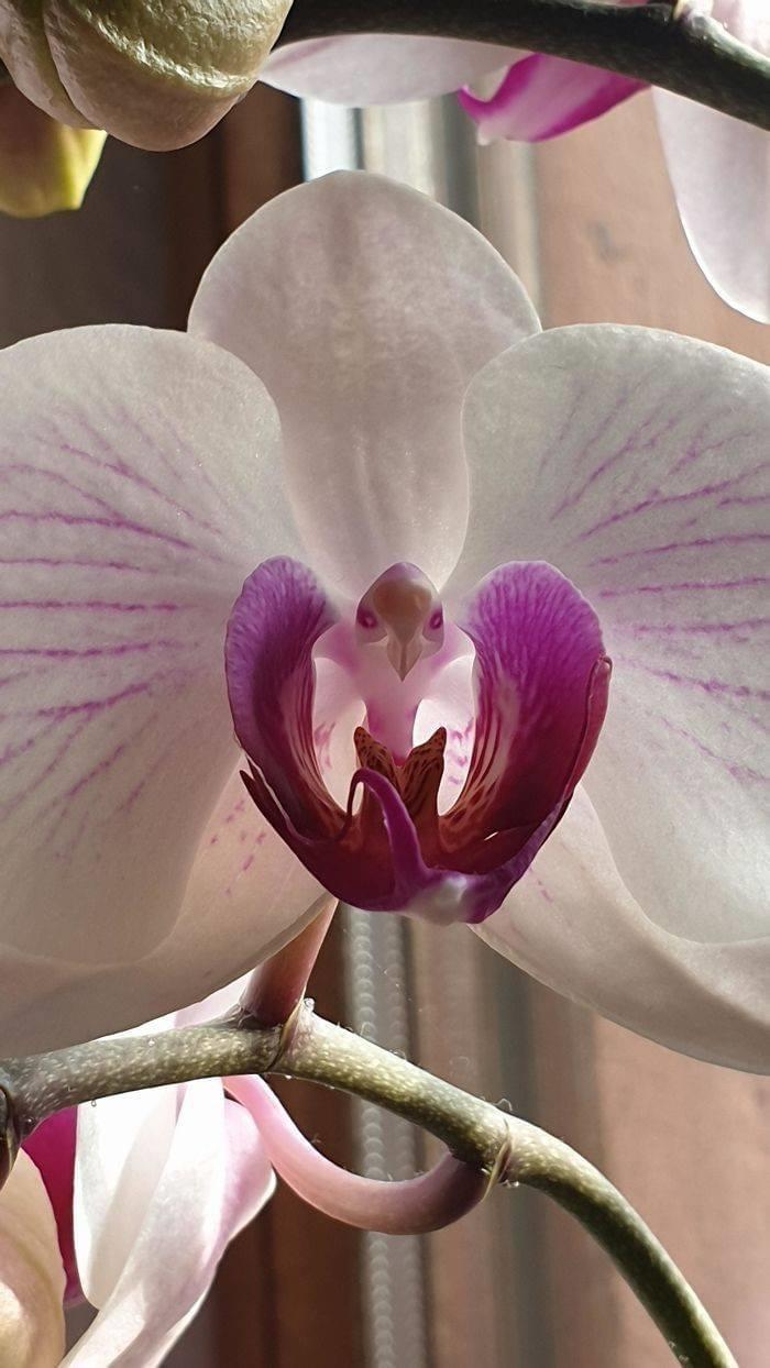 https://i.chzbgr.com/full/9514138112/h2378D2E2/flower