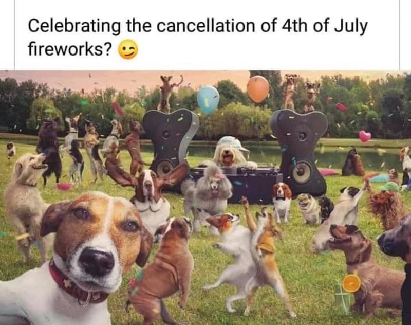 Dog - Celebrating the cancellation of 4th of July fireworks?