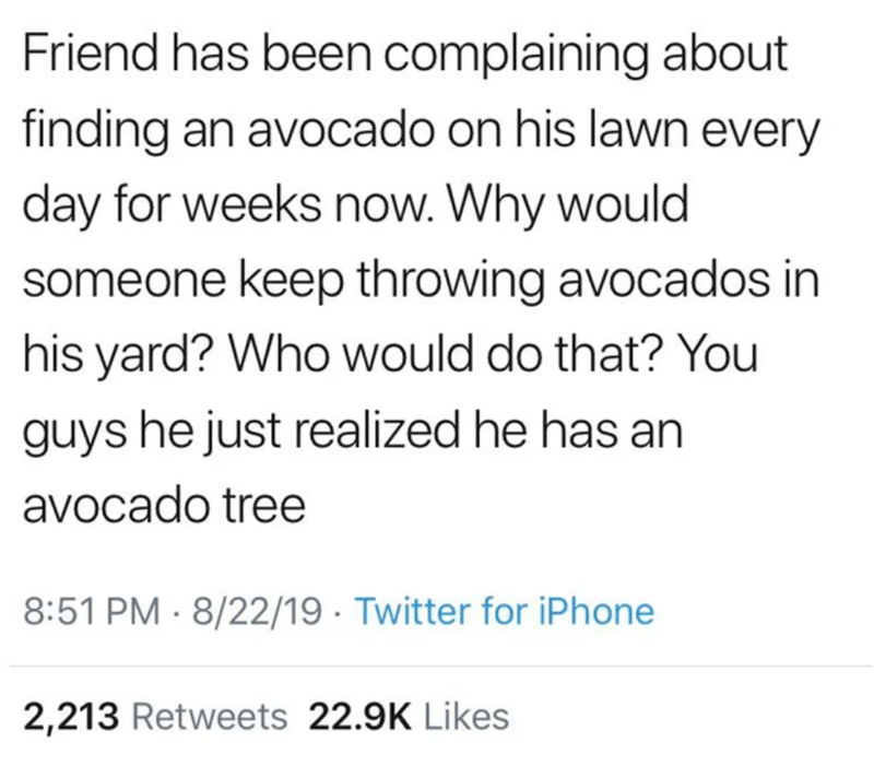 Text - Friend has been complaining about finding an avocado on his lawn every day for weeks now. Why would someone keep throwing avocados in his yard? Who would do that? You guys he just realized he has an avocado tree 8:51 PM · 8/22/19 · Twitter for iPhone 2,213 Retweets 22.9K Likes