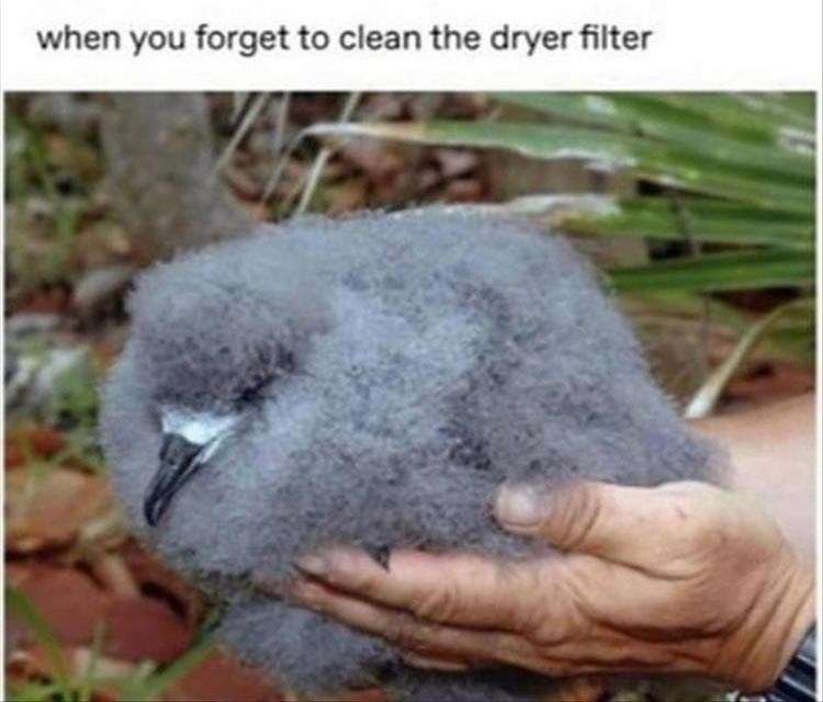 when you forget to clean the dryer filter very fuzzy baby bird