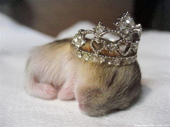 Headpiece - The Duchess of Tofu by fiesedetang www.hamster-club.com