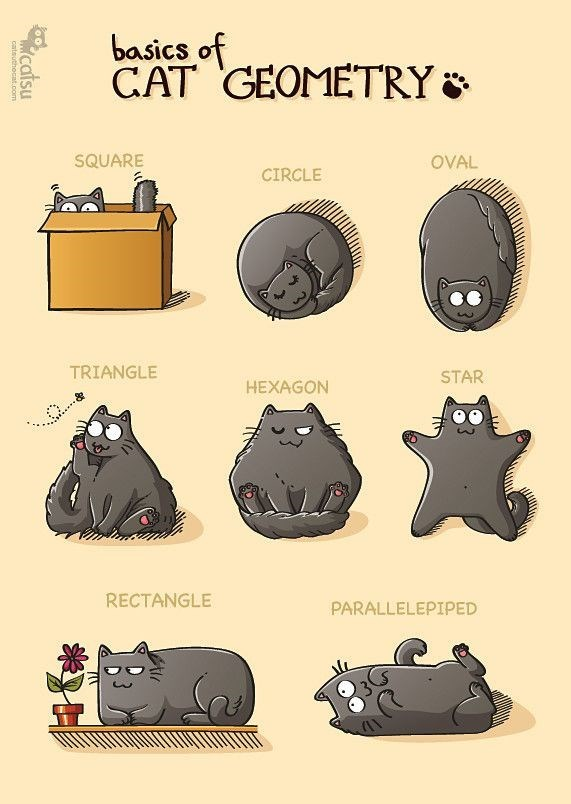 Text - basics of CAT GEOMETRY & SQUARE OVAL CIRCLE TRIANGLE STAR HEXAGON RECTANGLE PARALLELEPIPED catsu cateuthocnt com