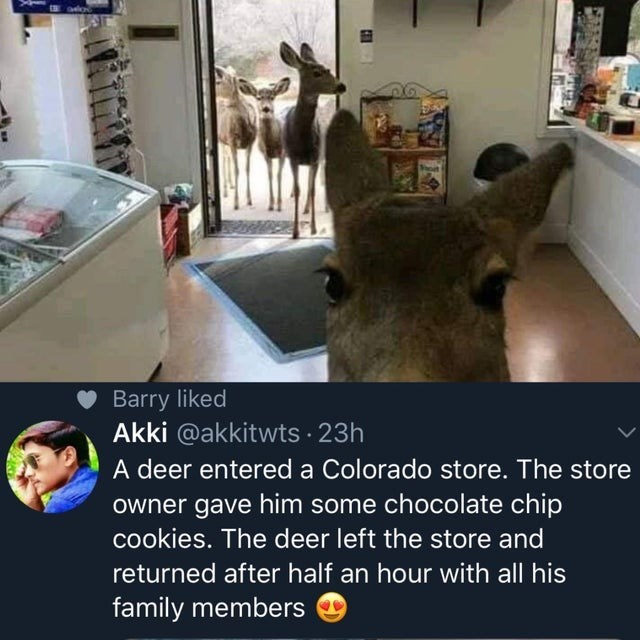 Head - Barry liked Akki @akkitwts 23h A deer entered a Colorado store. The store owner gave him some chocolate chip cookies. The deer left the store and returned after half an hour with all his family members