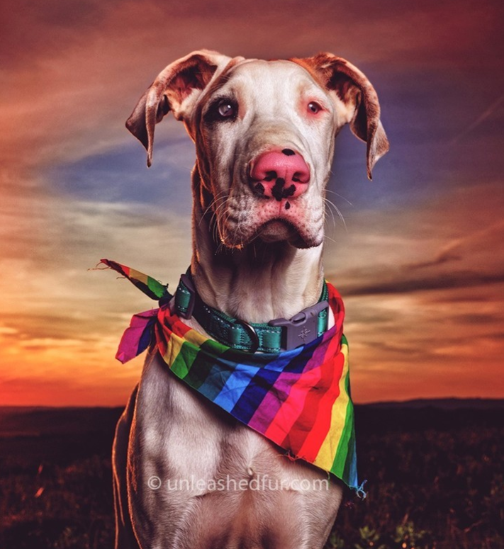 Dog - O unleashedfurcom