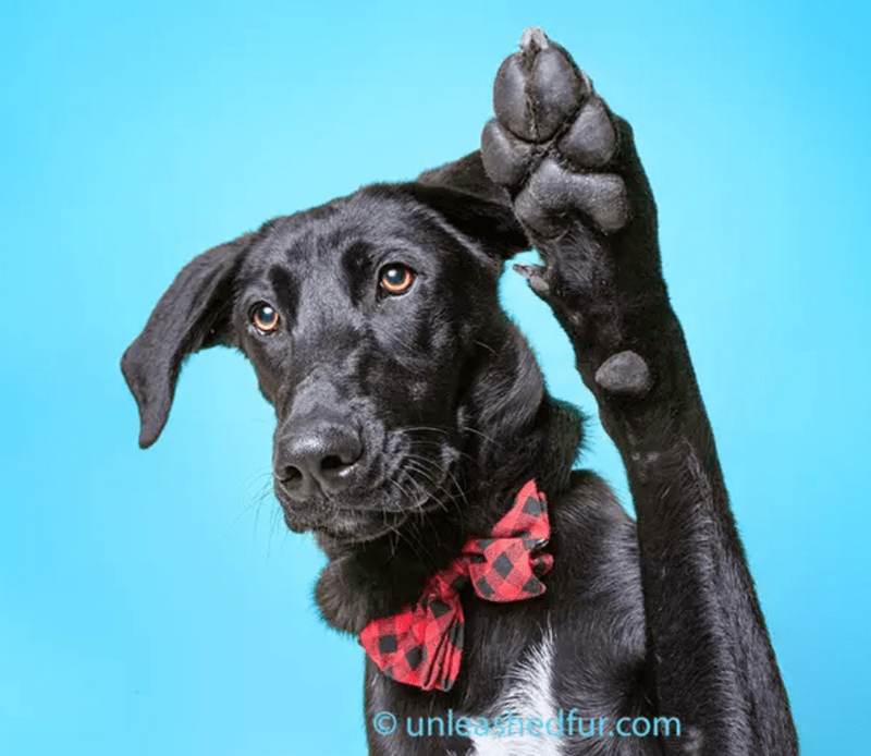 Dog - Ounleedfur.com