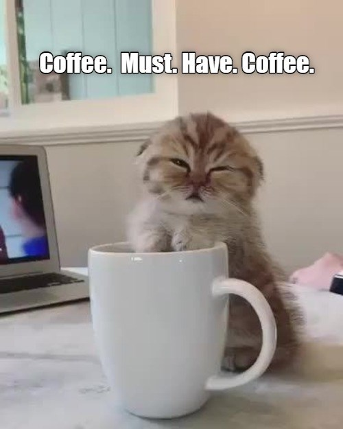 Coffee. Must. Have. Coffee. adorable sleepy little kitten leaning on a mug
