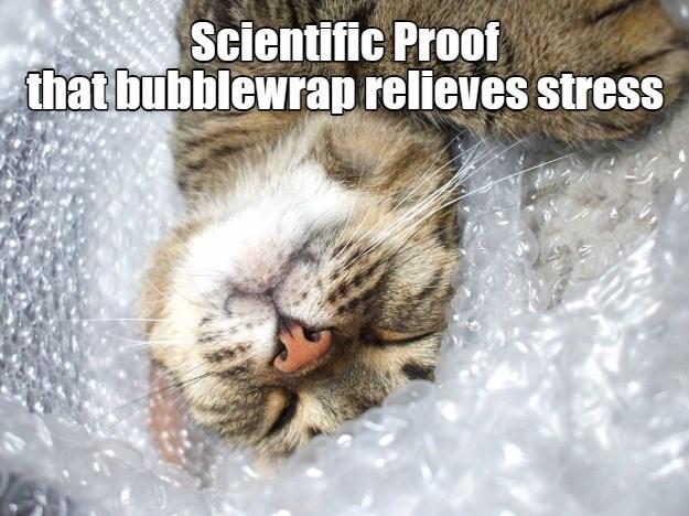 Scientific Proof bubble wrap relieves stress cute cat sleeping in packaging