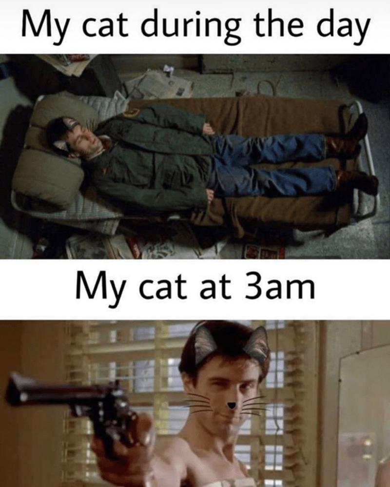 Funny memes , taxi driver, cat memes, robert de niro | My cat during the day My cat at 3am