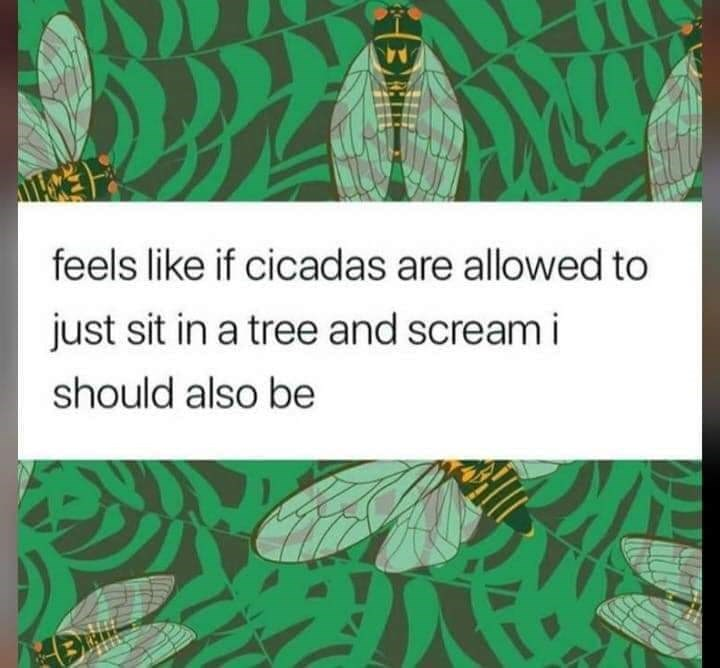 Text - A4 feels like if cicadas are allowed to just sit in a tree and screami should also be