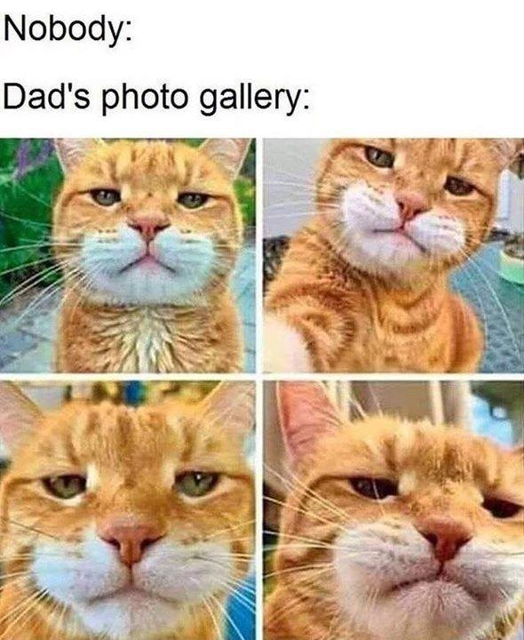 Nobody: Dad's photo gallery: orange cat with a serious expression taking front facing camera selfies