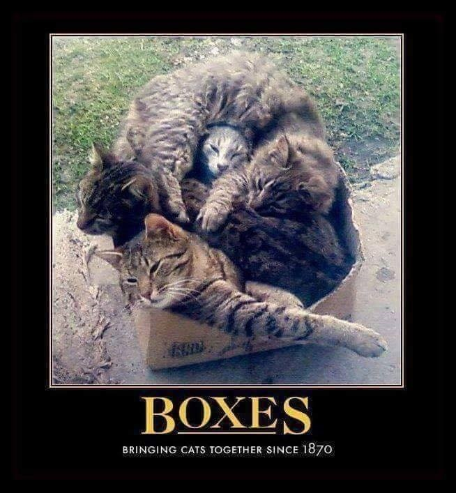 BOXES BRINGING CATS TOGETHER SINCE 1870 four cats squished together piled up in a box