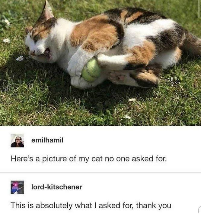 emilhamil Here's a picture of my cat no one asked for. lord-kitschener This is absolutely what I asked for, thank you cat playing with a tennis ball