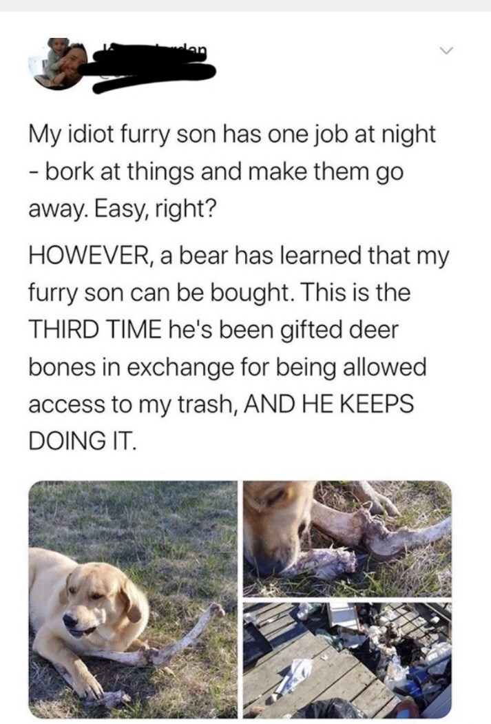 Text - My idiot furry son has one job at night - bork at things and make them go away. Easy, right? HOWEVER, a bear has learned that my furry son can be bought. This is the THIRD TIME he's been gifted deer bones in exchange for being allowed access to my trash, AND HE KEEPS DOING IT.