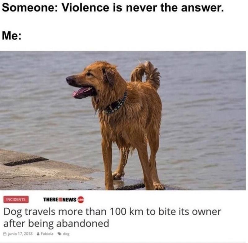 Dog - Someone: Violence is never the answer. Me: THEREISNEWS INCIDENTS Dog travels more than 100 km to bite its owner after being abandoned O junio 17, 2018 a Fabiola dog