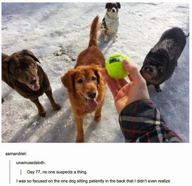 Dog - INO samandriel: unamusedsloth: | Day 77, no one suspects a thing. I was so focused on the one dog sitting patiently in the back that I didn't even realize