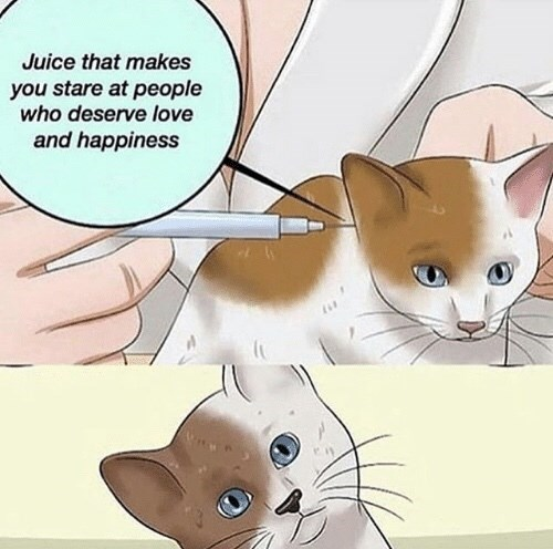 Cat - Juice that makes you stare at people who deserve love and happiness