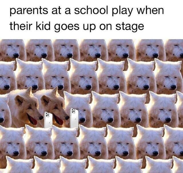 Bear - parents at a school play when their kid goes up on stage