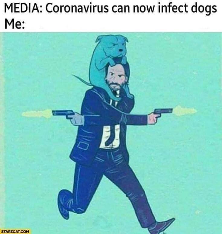 Photo caption - MEDIA: Coronavirus can now infect dogs Me: STARECAT.COM