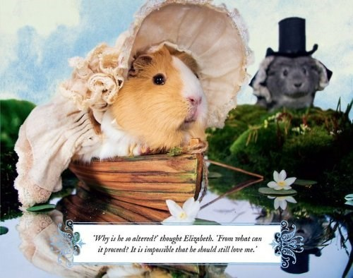 "Guinea pig - ""Why is he so altered? thought Elizabeth. ""From wobat can it proced? It is impossible that be sbould still love me."