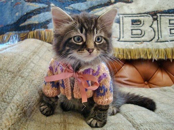 Cat - BE