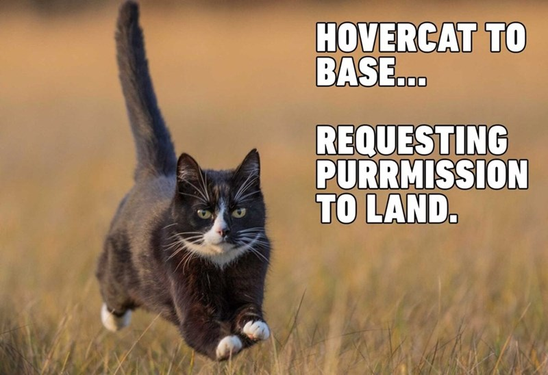 Cat - HOVERCAT TO BASE.. 000 REQUESTING PURRMISSION TO LAND.