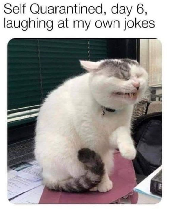 Cat - Self Quarantined, day 6, laughing at my own jokes