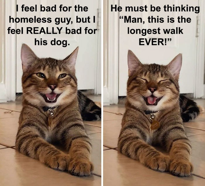 """Cat - I feel bad for the homeless guy, but I feel REALLY bad for his dog. He must be thinking """"Man, this is the longest walk EVER!"""""""