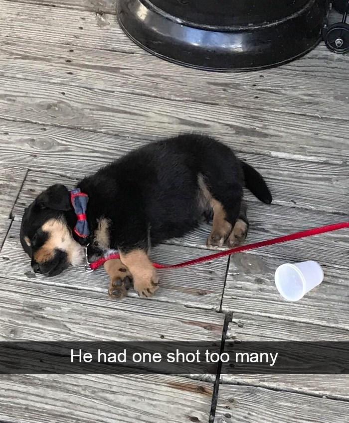 Dog - He had one shot too many
