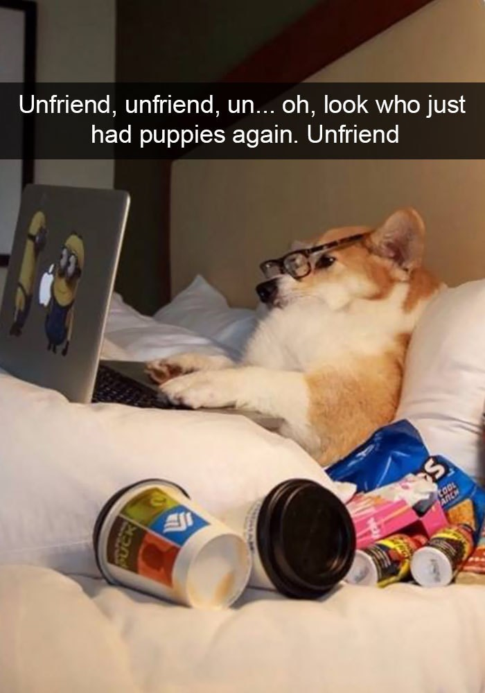 Cat - Unfriend, unfriend, un... oh, look who just had puppies again. Unfriend tooL ANCH