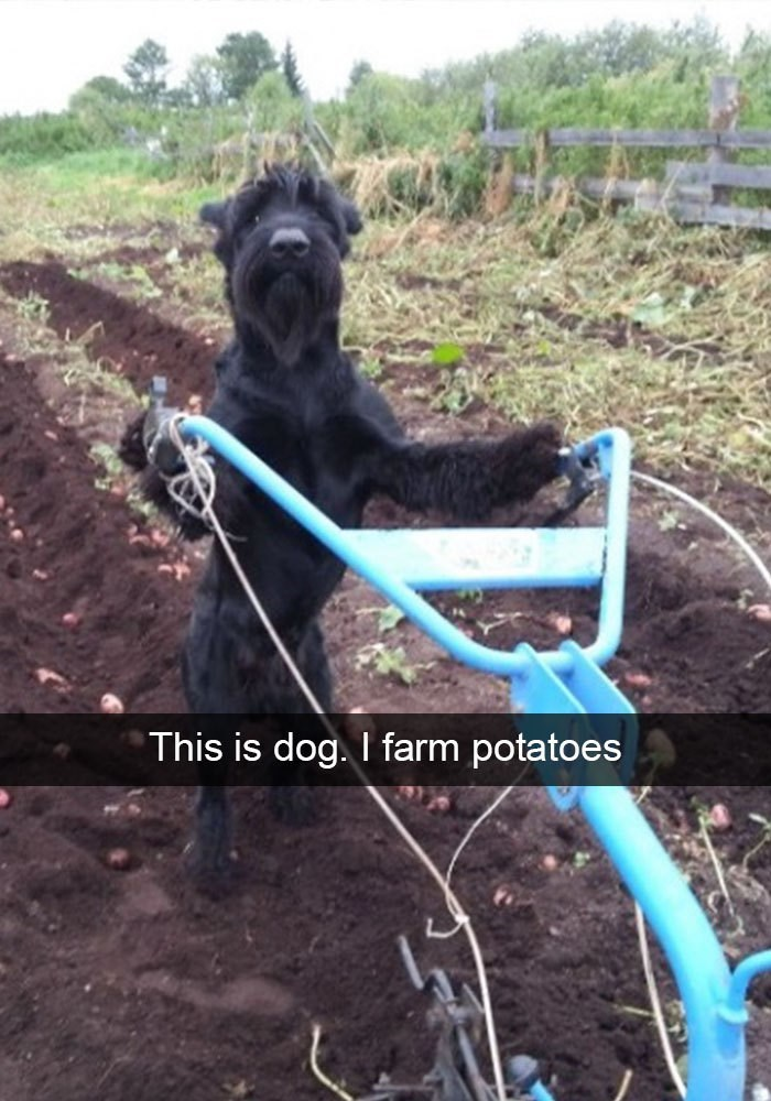 Soil - This is dog. I farm potatoes