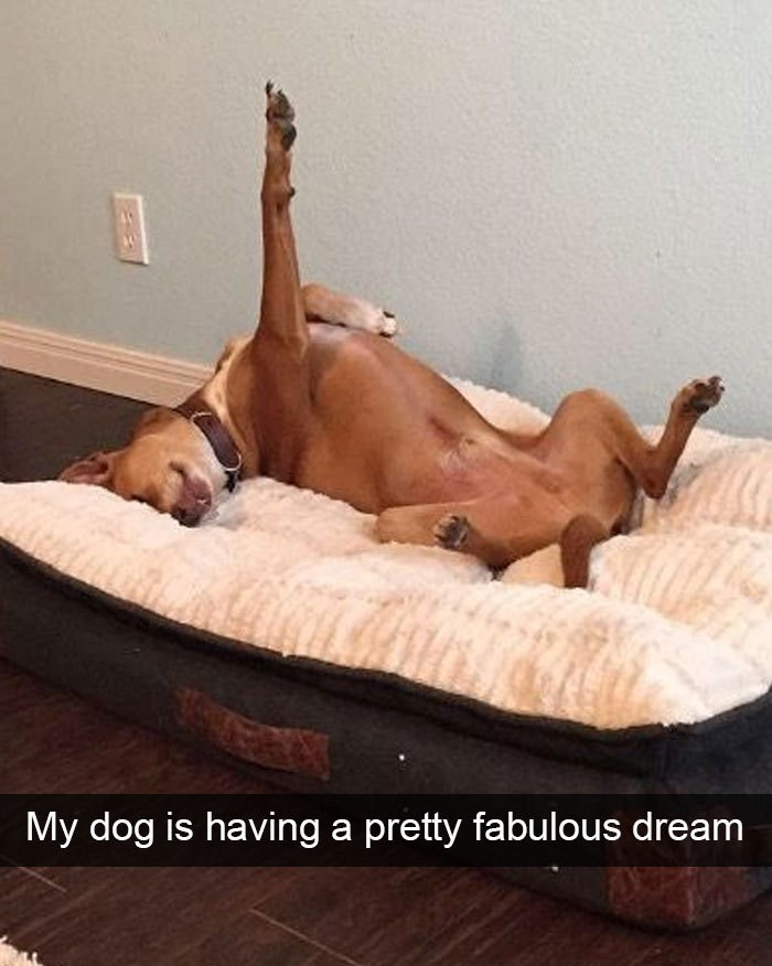 Furniture - My dog is having a pretty fabulous dream
